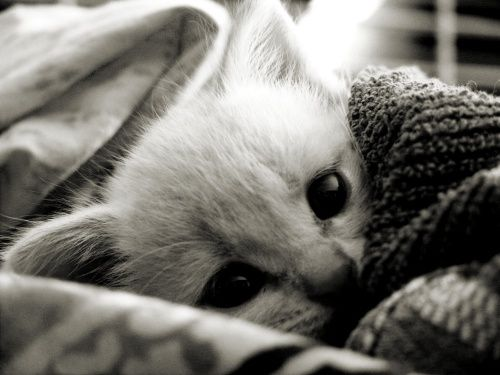 Peekaboo! This tiny kitty is peeking out of its cozy blankets to say hello. Source: thetragicwhale.com