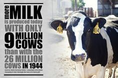 june dairy month infographic - Google Search