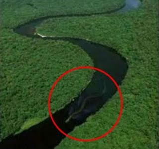 Anaconda de la Amazonia