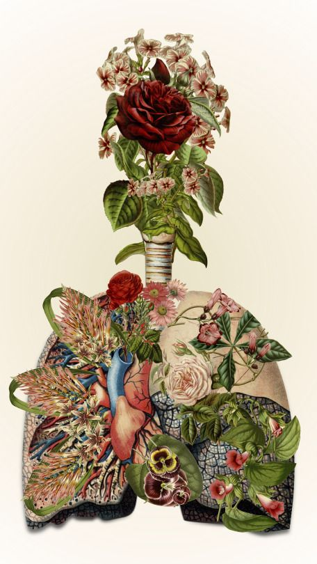 Travis Bedel, an anatomical collage artist that we've been studing in art…: