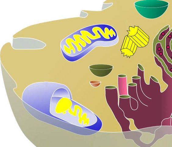 Biologia - Células - Guia do Estudante