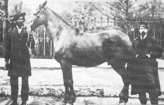 Abe's horse...Old Bob.