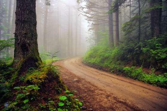 La route dans la forêt brumeuse.