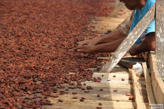 """Les coûts cachés de la filière cacao: """"Choisir une tablette de chocolat équitable permet de réduire jusqu'à 80 % le coût sociétal généré par la production du cacao"""" - Comme quoi, nous ne sommes pas les seuls à encourager le commerce équitable ! 👍💪👌 http://urlz.fr/3DUv"""