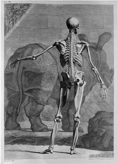 Bernhardus Siegfried Albinus: Tables of the skeleton and muscles of the human body. 1749 / Wellcome Library, London