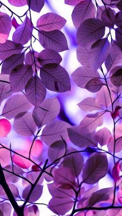 Leaves Wallpaper 3d Whatsapp Leaves Paper Wall Whatsapp In 2020 Purple Wallpaper Phone Flower Background Wallpaper Nature Iphone Wallpaper
