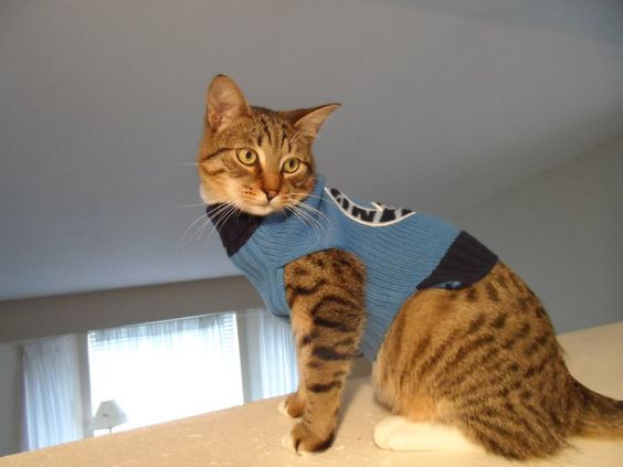 Dwayne in his new sweater