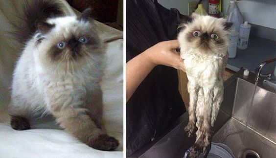 Before and after bath so adorable - Album on Imgur