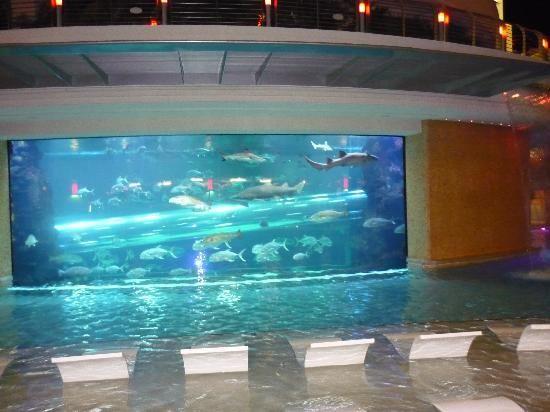 Aquarium Pool At The Golden Nugget Las Vegas Water Slide Through The Shark Tank Awesome