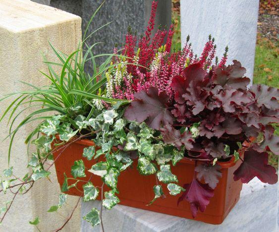 ... Blumenkasten 40 cm wintergrün Balkon und Terrasse Pinterest