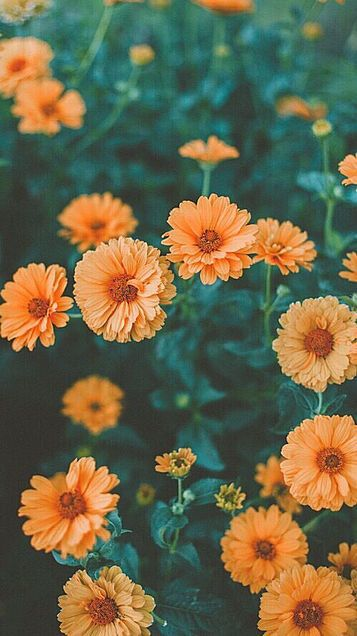 Image De Flowers Orange And Nature In 2020 Hipster Wallpaper Iphone Wallpaper Hipster Flower Aesthetic