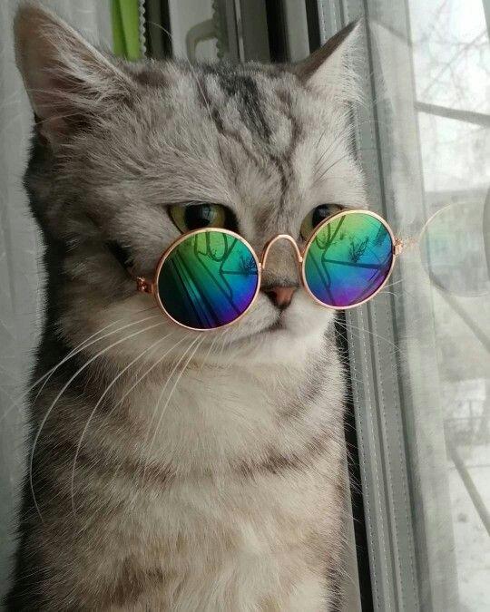 Cat With Glases Gatos Bonitos Gatos Cool Perros Y Gatos Tiernos