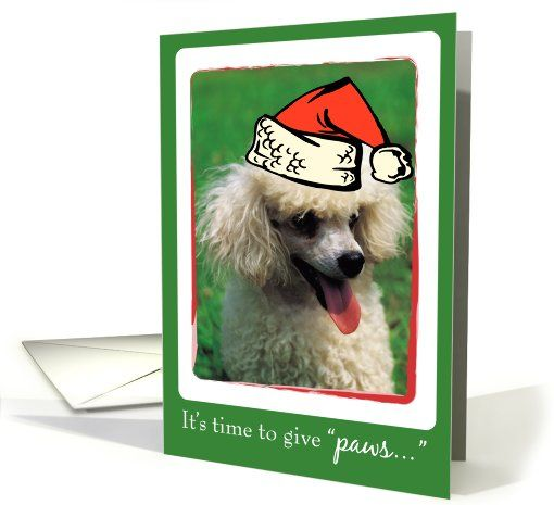 Miniature White Poodle Dog Christmas card