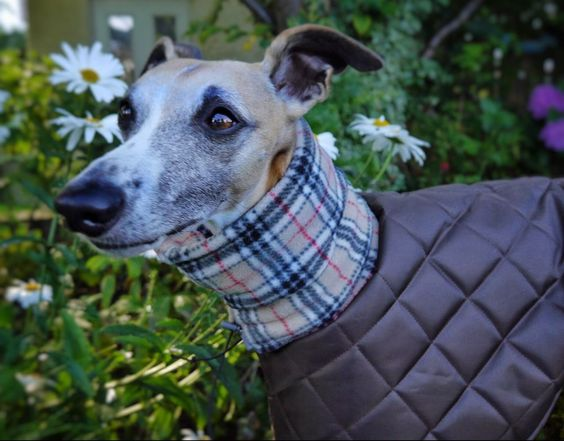 Whippet Winter coats and eBay on Pinterest