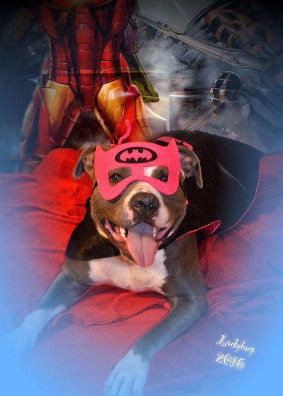 Dog Costume Superhero Cape Dog Cape Dog Clothes by partiesandfun