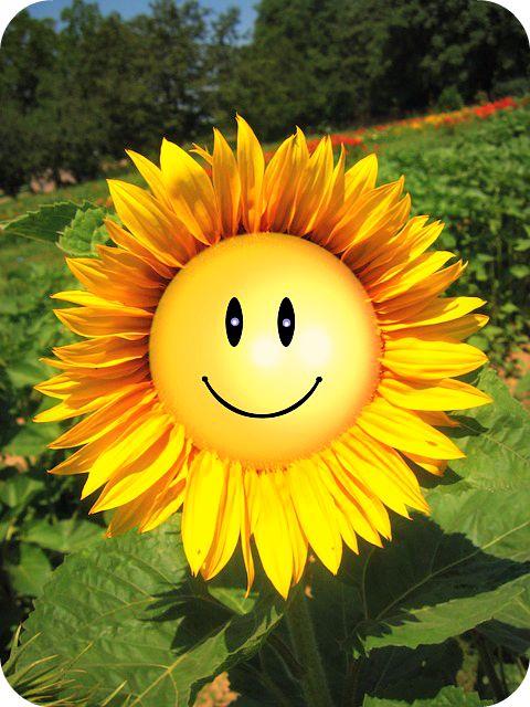 Altijd Beginnen onze Nieuwe Dag met een Brede Glimlach. - Jan Jansen