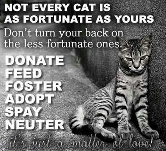 Donate, Feed, Foster, Adopt, Spay, Neuter.