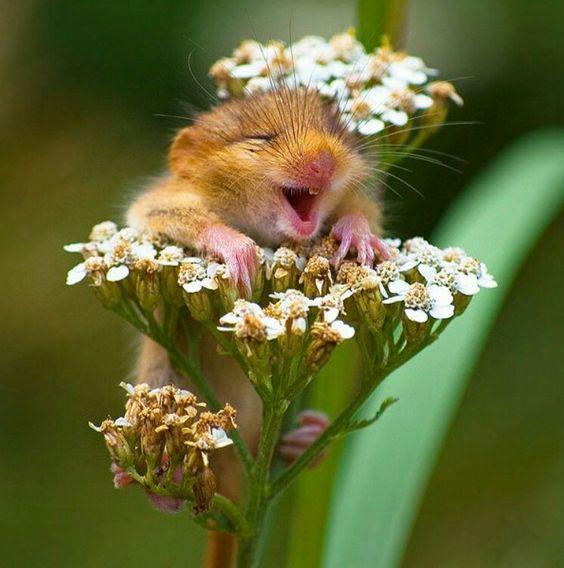 Und der Preis vom besten Lächeln geht aaan...