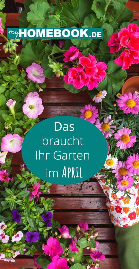 Das Braucht Der Garten Im April Garten Blumenkohl Pflanzen Rosen Pflegen