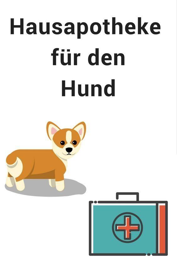 Notfallapotheke Fur Den Hund Das Gehort Hinein Hunde Hunde Erziehen Gesunde Hunde