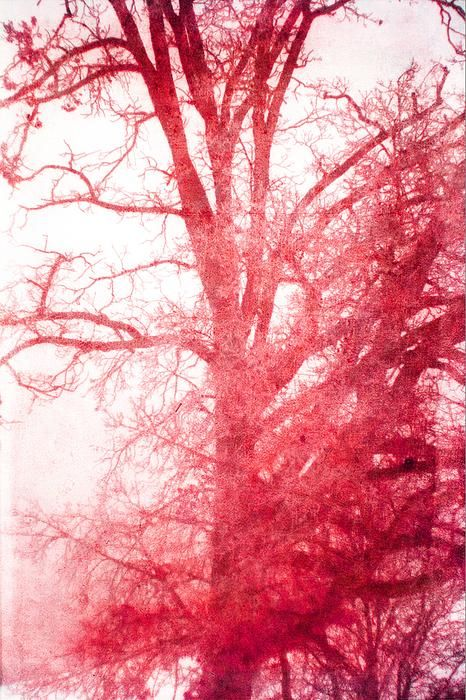 Snowy Red Pink Tree, print by Suzanne Powers $22.00