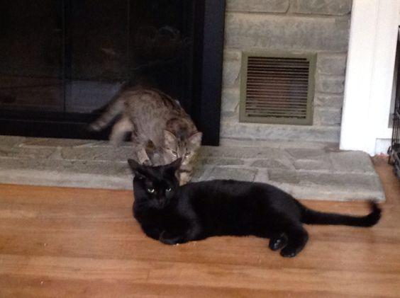My babies, Jazzmine (black, 2 yrs), and Daizy (stripe, 5 mths).