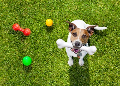 Pin En Beagle