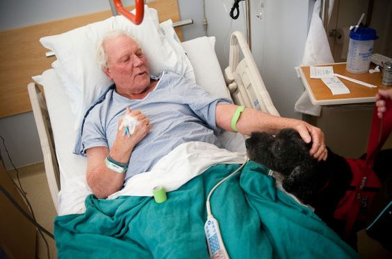 The therapy dogs at Utah Valley Regional Medical Center offer smiles and healing to patients.