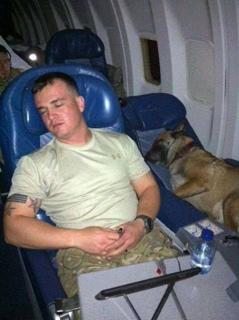aplacetolovedogs: Two heroes coming home get a well-deserved rest! The only way to fly!
