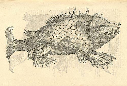 "Monstrosus Sur marinus ""Ulissi Aldrovandi (Aldrovandus) (1522-1605)   Woodcut illustrations from Aldrovandi's 'History of Monsters'"