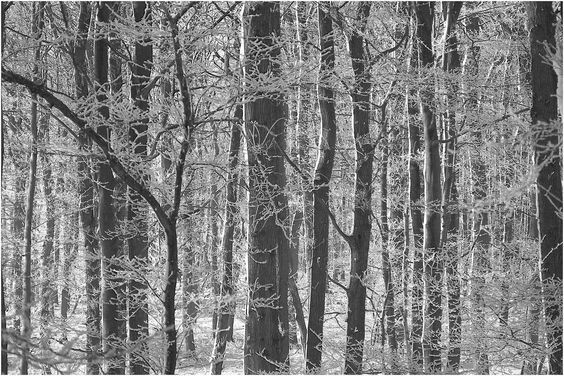 Winterwald am Niederrhein