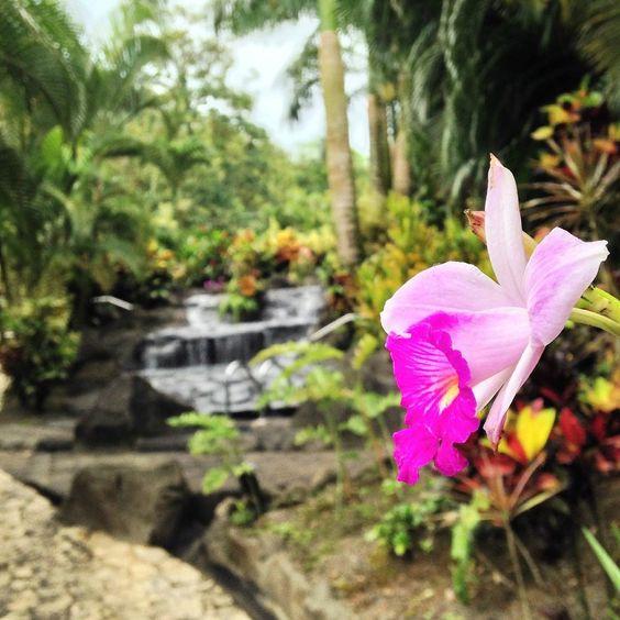 Titokú Hot Springs - La Fortuna de San Carlos - Opiniones de Titokú Hot Springs - TripAdvisor
