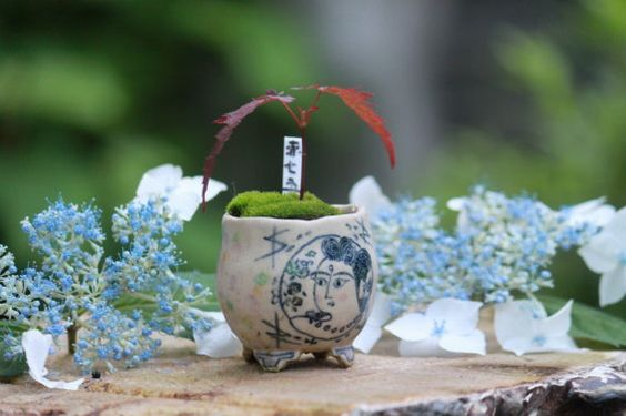 「1本の赤七五三」の画像|超ミニ盆栽のブログ |Ameba (アメーバ)
