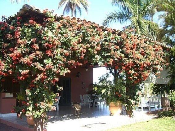Trepadeira Sombra para Jardim #trepadeira #plantas #jardin