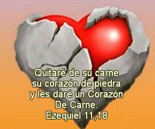 Les daré un corazón nuevo y pondré en su interior un espíritu nuevo. Quitaré de su carne su corazón de piedra y les daré un Corazón De Carne. Ezequiel 11,18