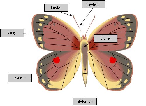 characteristics of the housefly Did you know that the house fly tastes with its feet, which are 10 million times more sensitive to sugar than the human tongue find more fun facts about flies, including house and fruit flies, along with other information for kids in our student pest guide.