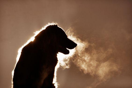 "500px / Photo ""winterbreath"" by Anne Geier"