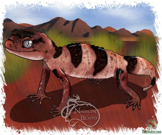 Knob Tail Gecko Daily Creature by NadilynBeatosArt on Etsy, $10.00