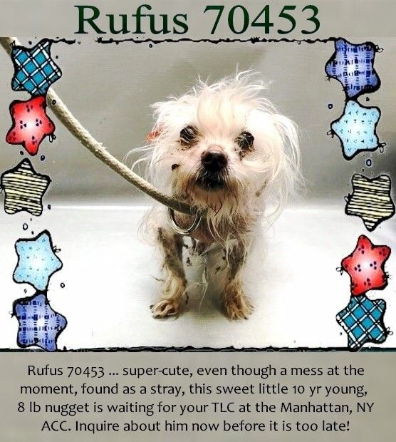 Small Senior Dog Is A Mess And Needs Some Help At Nyc Shelter Senior Dog Animal Rescue Animals