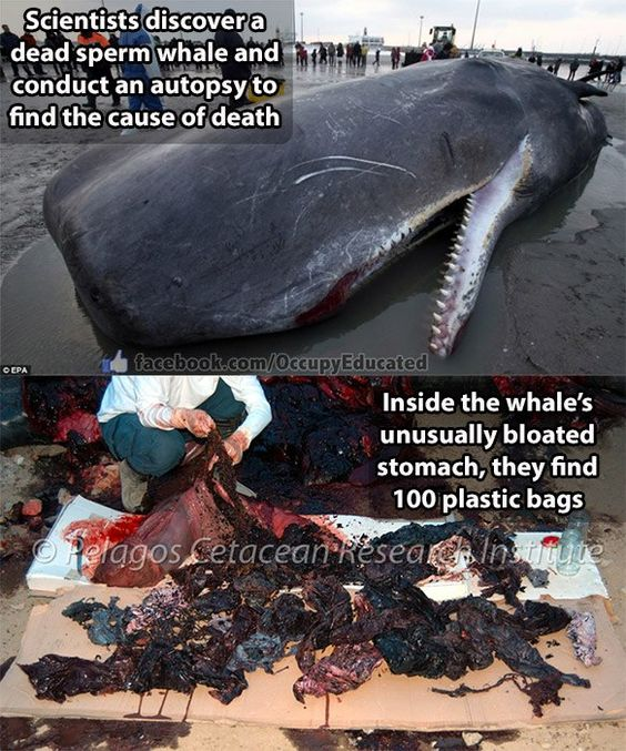 Does anyone know if whale hunting is actually necessary for survival in any country at all?