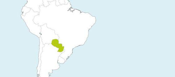 Danke, dass Sie mit uns Paraguay unterstützen! Uns ist es wichtig mit jeder verkauften GUAMPA Energy Dose nachhaltig die paraguayanische Stevia–Kleinbauern und künftige Generationen zu unterstützen. 1 Cent pro verkaufter Dose geht an die Stiftung Fundación Granular unseres Partners Real Stevia™, die den Menschen in Paraguay mit kostenlosem Training und Ausbildung vor Ort hilft, Kooperationen fördert und die Landwirte mit gesunden Stevia Jungpflanzen versorgt.