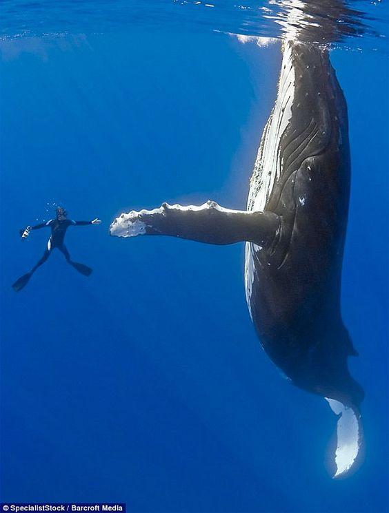 High Five a Whale! #LifeList #Adventure