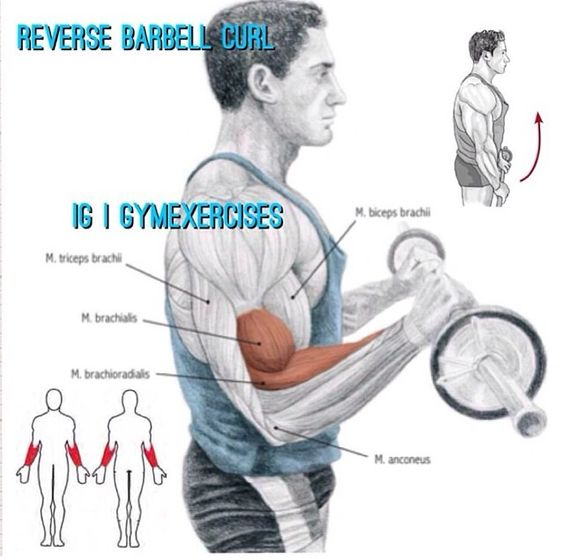 Barbell Curl Anatomy: Curls, Motivation And Lifestyle On Pinterest