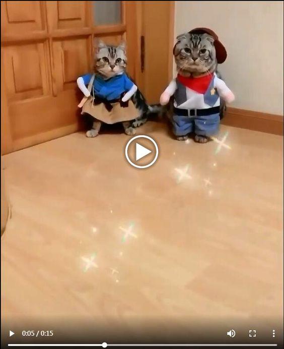 Videos de Gatos gaiatada para morrer de ri