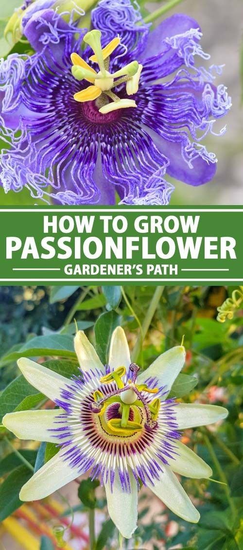 Pin On Diy Gardening