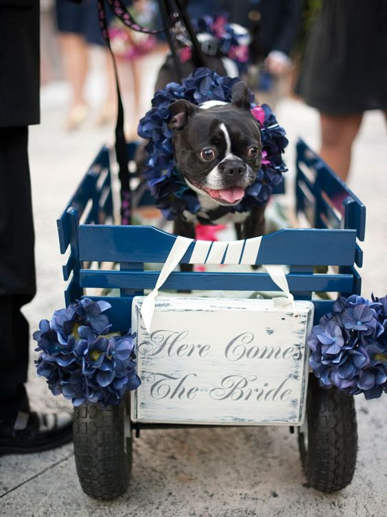 Google Image Result for http://www.bridalguide.com/sites/default/files/article-images/PHOTO-OF-THE-DAY/justin-mary-dog-wagon-ceremony.jpg: