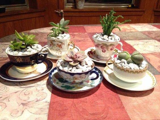 Succulents in tea cups- hostess gifts