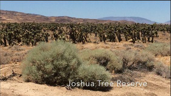 Joshua Tree Preserve Palmdale, California