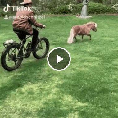 Homem querendo pegar seu animal