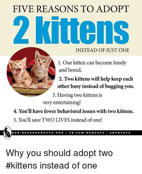 Five Reasons Why Adopting 2 Kittens Is Better Than Just Getting 1